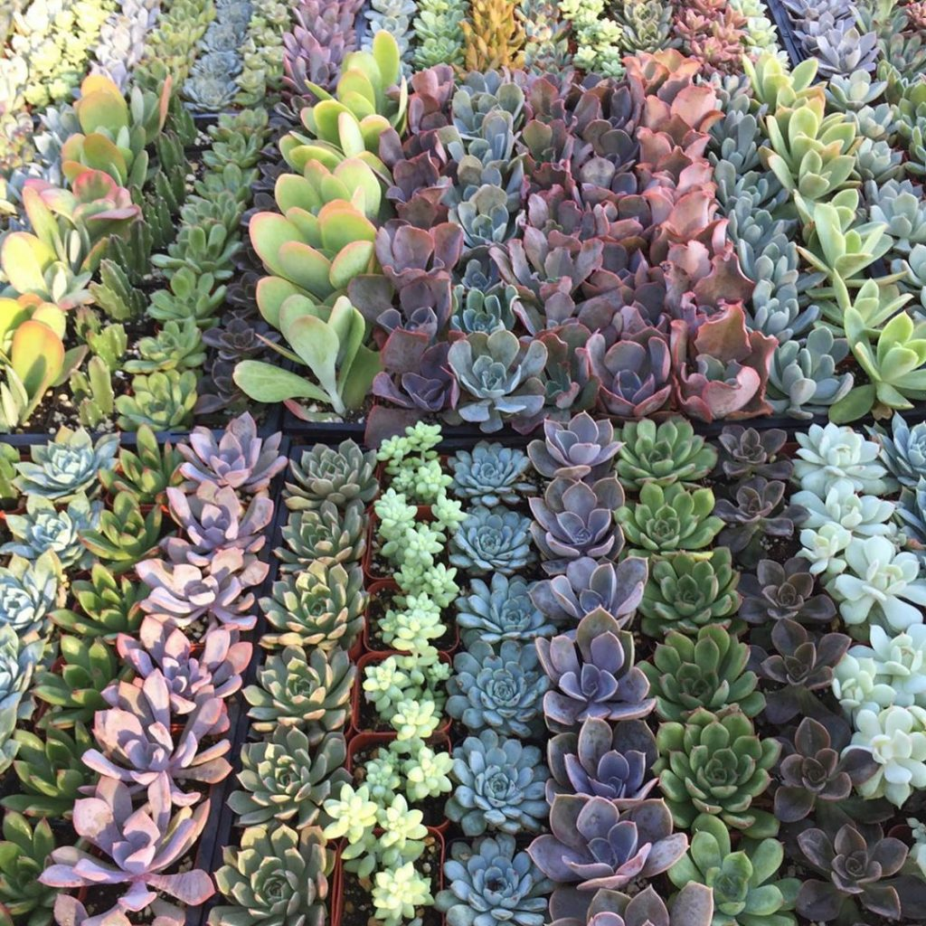 2 192 Pack Assorted Succulent Favors Collection Wedding Party Favors Bridal Shower Baby Shower Arrangements Gifts Wishies